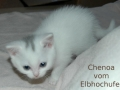 chenoa9