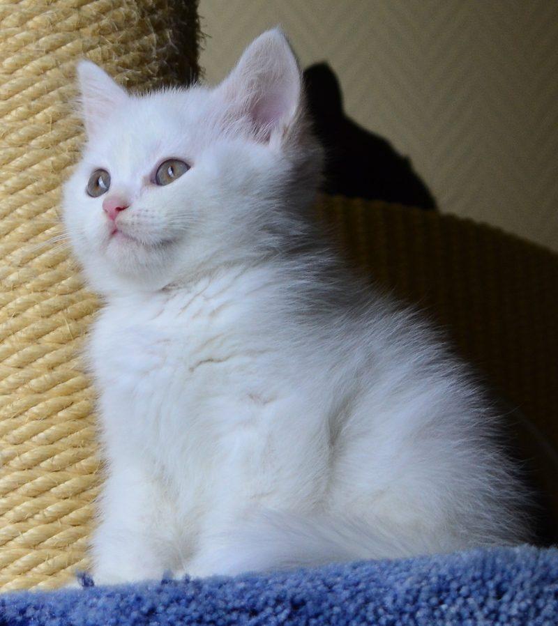 geliebter kater flocke